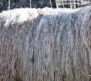 White Blossom fleece